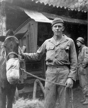 45th Infantry Division Mule Driver in Italy